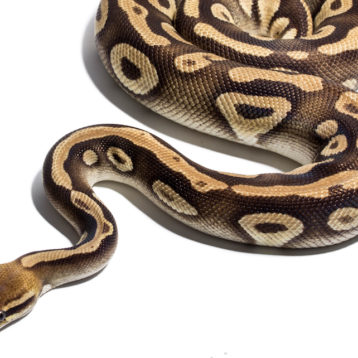 Python Training: Where to Start and the Best Options